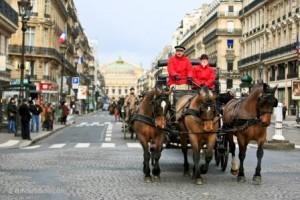 Salon du cheval paris du 3 au 11 d cembre 2011 for Adresse salon du cheval paris
